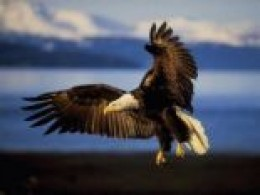 Will I be able to soar through life like an eagle?