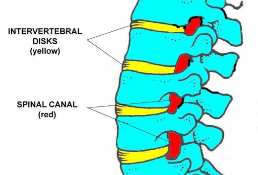 Section of the spine showing the vertebrae (blue), the intervertebral disks (yellow) and spinal canal (red)