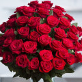 One Hundred Red Roses of Love. Poem and prose - Manatita