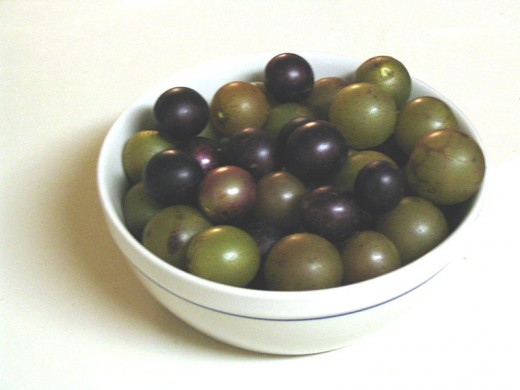 purple muscadines and green scuppernongs