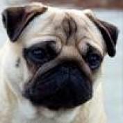 Puglucy profile image