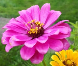 Gardening with Annuals