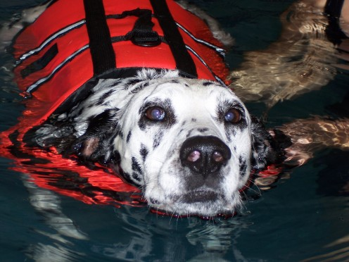 Ollie demonstrates life jacket safety.