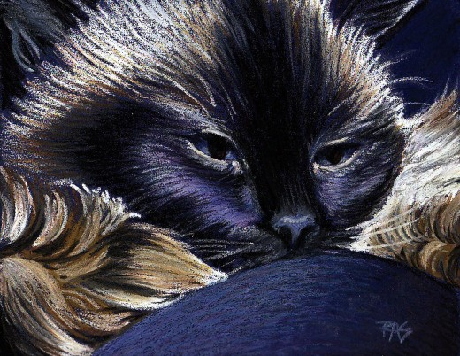 "Ari On My Knee, 9"" x 12"" oil pastel on sanded pastel paper by Robert A. Sloan -- he looks like a lovable sweet cuddle cat, but to a bird or mouse he is a deadly predator."