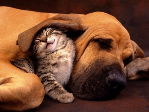 Dogs and Cats have long been companions with each other; not all see each other as enemies