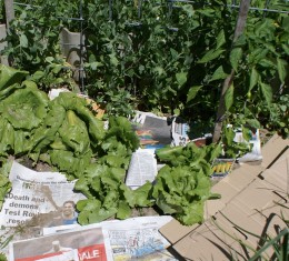 Lay newspapers or cardboard between vegies and cover with weeds or sand