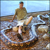 "Reticulated Python, world's longest snake.  This one, ""Worm"" is 25 years old and will live another 15 years.  He likes hamburgers and is very gentle! ...got some growing to do!  animalplanet.com credit."