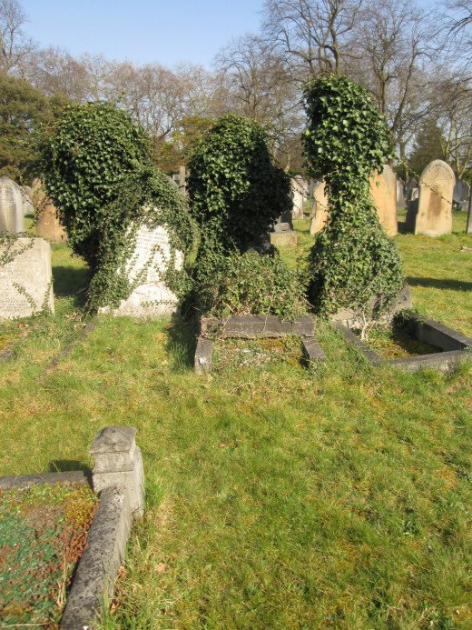 A trio of memorials is gradually overtaken by a growth of ivy. In some parts of the grounds you see memorials, side by side, with ivy taking over only one. Damp and light probably have a lot to do with it, location under trees or on a western side. .