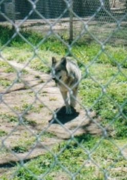 are zoos cruel to wild animals essay