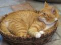 Cat Symptoms and Quirks
