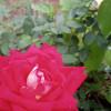 pstraubie48 profile image