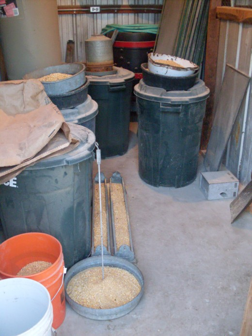 Here are the various feeders Miss Heather uses at this stage. What quantity! The barrels are full of millet for the laying hens. The chicks go thru 6+ gal. of water each day, and Ms. Heather hauls away 5-6 gallons of manure daily.