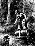 Johnny Appleseed and Apple Recipes