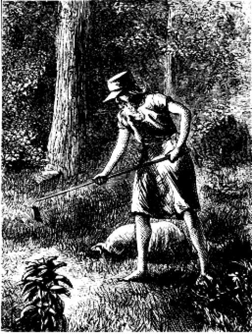 John Chapman planting a nursery of apple trees (public domain).