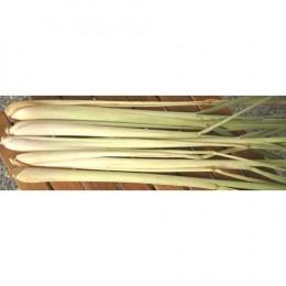 Stalks of Thai lemongrass