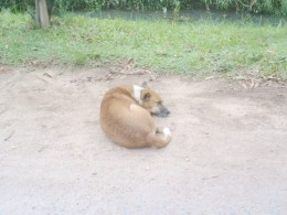 caught in the act - lazy dog taking a cat nap!