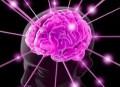 More Brain Plasticity Science