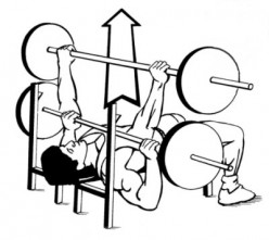 A beginners guide on how to Bench press, Squat, Lunge, and Standing curl
