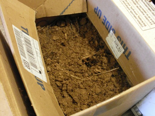 This box contains beets, and is filled with peat moss. Like the sawdust, it is kept damp. If your filler dries up, your root vegetables will too. The boxes are normally kept closed, and the cellar is usually quite dark.
