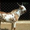 indiangoatfarm profile image