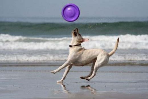 Many dogs love to play on the beach! Can you say fun!? WOOF!
