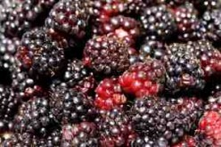 Agar Blackberry Jam Recipe.