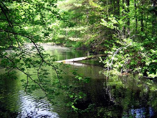 backwoods of kentucky