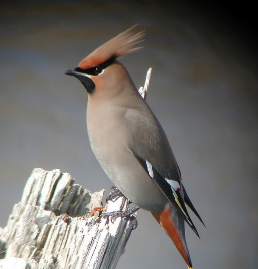 1596040 f520 - Most beautiful Birds of The World
