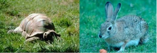 Toritose vs Hare