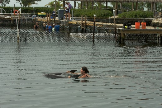 Swim with dolphins! ...notice in far background pin, staff does a dolphin wellness check
