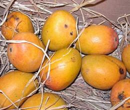 Ripe Yellow Mangos