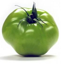 """Green """"unripe"""" tomato"""