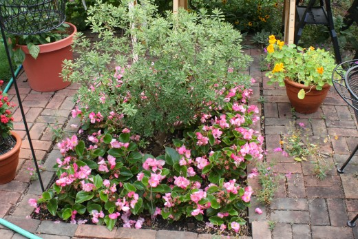 Begonias, Daphne, Nasturtiums