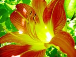 Flower by Henry Garciga