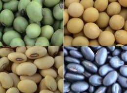 The marvels of soya beans... not only great in warding off certain cancer but also good for the brain too...