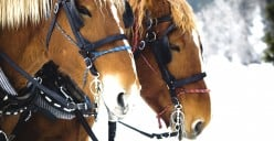 Bridles and Bits For Your Horse