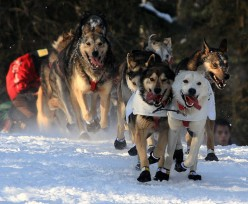 Blind, Female Musher Defies the Odds - The Rachael Scdoris Story