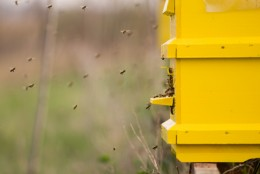 Bees entering their hive.  Photo by Mgyula at Dreamstime.com
