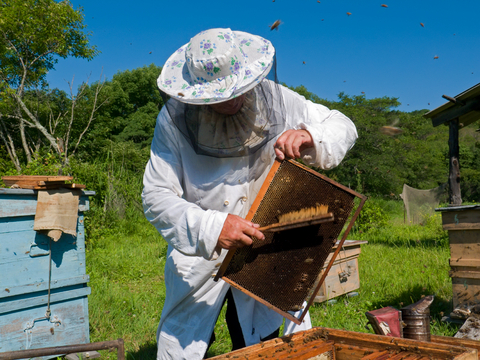 Beekeeper getting ready to collect honey.  Photo by Kirsanovv at Dreamstime.com
