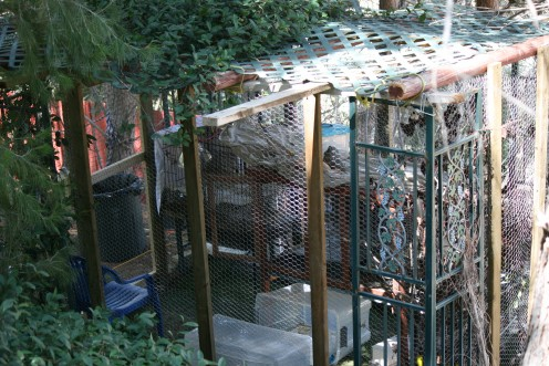 Habitat I is 16'X8', it has metal crates for roosting, shut at night for added protection, and is covered top to bottom with chicken wire.