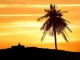 Sunset palm