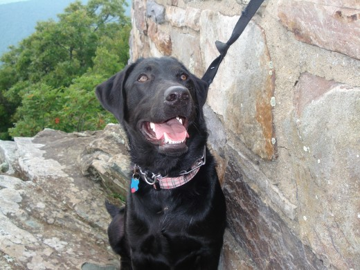 Zoey at the top of Hawksbill