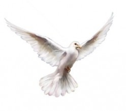 The Holy Spirit In The Life Of The Believer