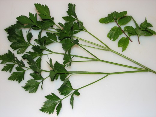 Parsley Branches and Sprigs of Mint