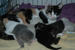 Claire and her kittens!