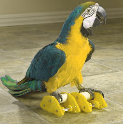 Safe toys for pet birds