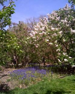 Brooklyn Botanic Garden in spring.