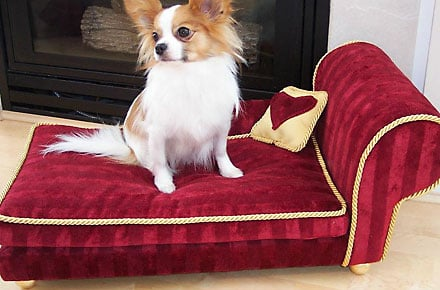 Designer dog beds add flair to your decor!