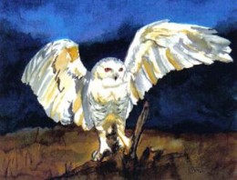 Snowy Owl by Paula Atwell is available for sale at http://lakeerieartists.com