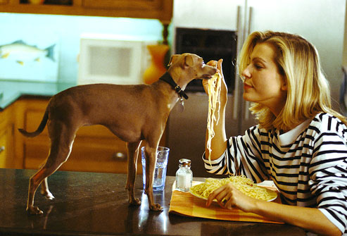Cooked white rice or pasta is just one ingredient in healthy homemade dog food.
